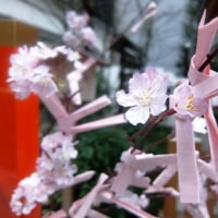 たくさんのねがいの春 @日本橋