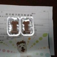 コタちゃんの予防接種