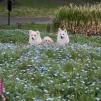 """記念公園 最終画像はネモフィラ 👀"""""""