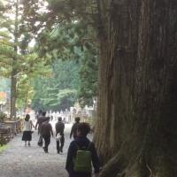 いつの時代も人というは「寄らば大樹の陰」だね。(写真は高野山奥の院、杉の大樹)