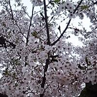 おととい錦糸公園