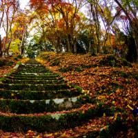 2016 御霊モミジは見ごろだった 2 (急な階段を上るのだが行きはよいよい帰りは怖い)《大分県耶馬渓町》