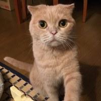 トシミと握手。