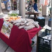 ▲名古屋広小路で「れんこん村のサムライ市」
