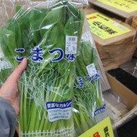 水耕栽培の小松菜です