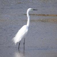 鳥見 その二 江津湖は続くよ