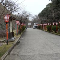 津山市鶴山公園の桜の開花状況
