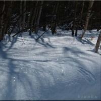 2月最後の森で