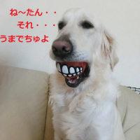 れぐぽて、入れ歯を入れる
