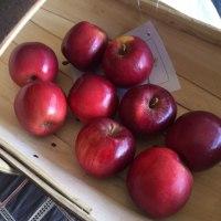 青森のリンゴはこれだ⁉️