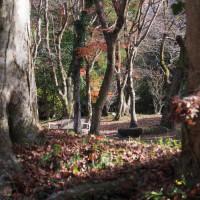 散歩途中の休息所・・梅園さんの庭