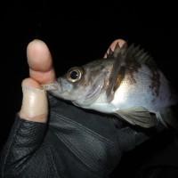 メバ9  フロートで初釣果