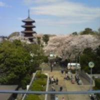 本日の池上本門寺。