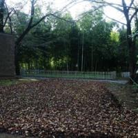 落ち葉とイルミネーションの季節ですね・・・