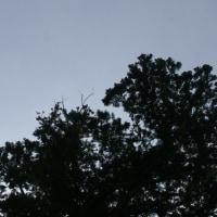 千葉県多古町、東松崎厳島神社の大杉です!!