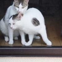 網戸越しにかあさんを呼ぶ猫