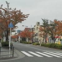 西新井西口の紅葉並木