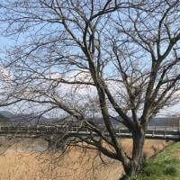 M川のほとりで   (散歩  3)