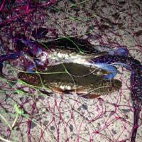 芦北・タチウオ釣りには玉網持参で♪