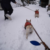 広島33年ぶりの大雪