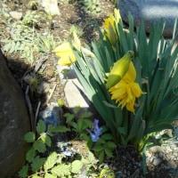 花たちは風に靡きながらも ひたすら咲いている…
