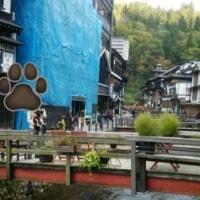 黒柴かんべえと山形県 銀山温泉へ