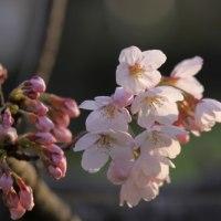 本多聞の春
