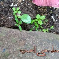 小さな庭の小さな生命達