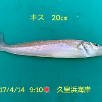 笑転爺の釣行記 4月14日☀ 久里浜海岸
