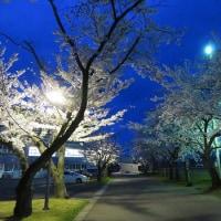 4月25日の散歩道