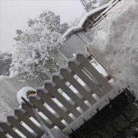 再び、雪ッ!