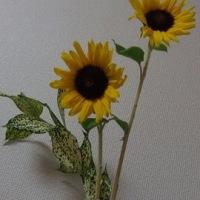 花で開運 ひまわり