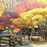 お友達と公園で紅葉 ♪