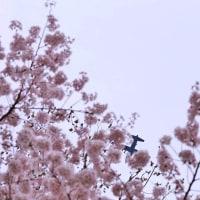 浅川散策 あっ、飛行機だ! ✈