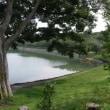 東山湖のアオサギ