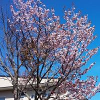 ◆◇5月19日◇◆桜も咲いたし!~オープンハウス開催情報&新着!