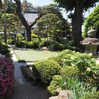 ★松本市 玄向寺の綺麗な芍薬や牡丹と石仏 2017