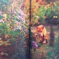 いつか行ってみたい花の庭 『武市の夢の庭』    北海道紋別郡 『陽殖園』