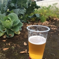 鍋野菜の収穫