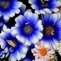 花よ花姿が美しく