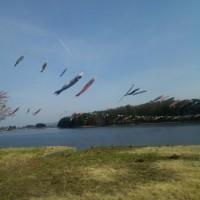徳良湖の鯉のぼり