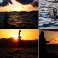 『照ヶ崎』 釣る