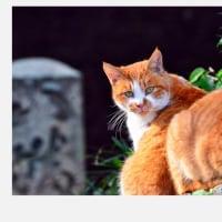 饒舌な眼をした猫さんたち