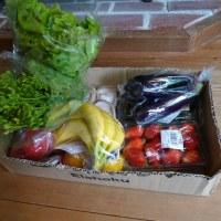 休日は新鮮野菜を買いに