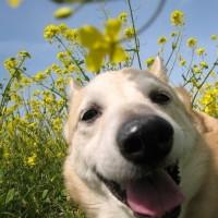 愛犬まるの表情豊かな1枚