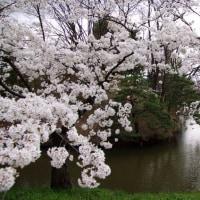 上田城と田舎そば~17年4月北信越さくら旅行記その2