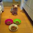 ご飯だよーーーー!