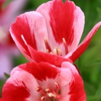 散歩道の花々 5月