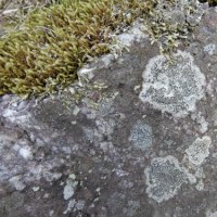 段々畑の石