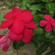 ケアハウスに咲いていた花に教えらて・・・
